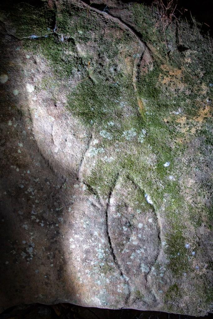 AWAT9533 LR Smiths Creek - fish engravings