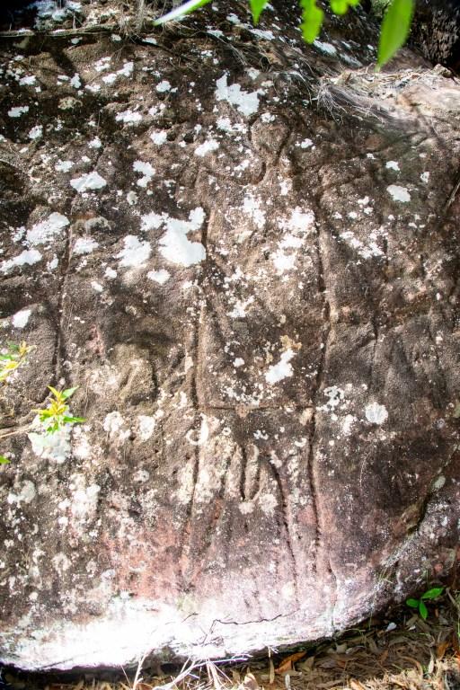 AWAT9633 LR Upper Smiths Creek frieze and mundoes