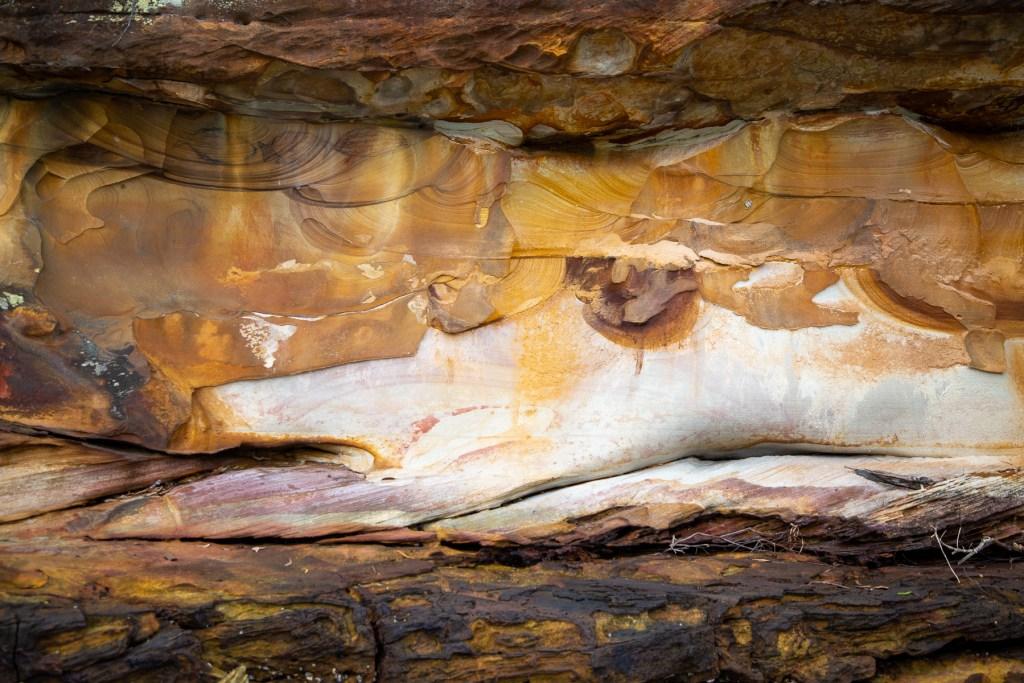 AWAT9697 LR Smiths Creek fish paintings