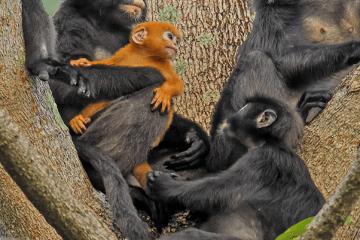 image 2 Exploring Penang National Park