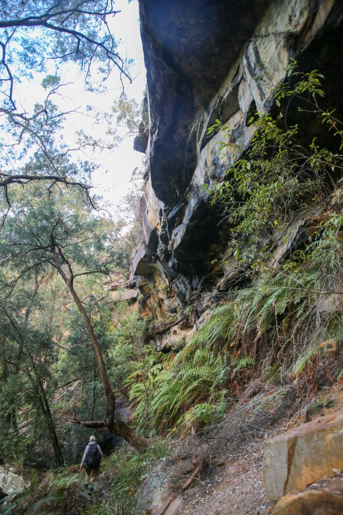 AWAT7001 LR Caves, Cliffs and Koalas near the Bairne Track