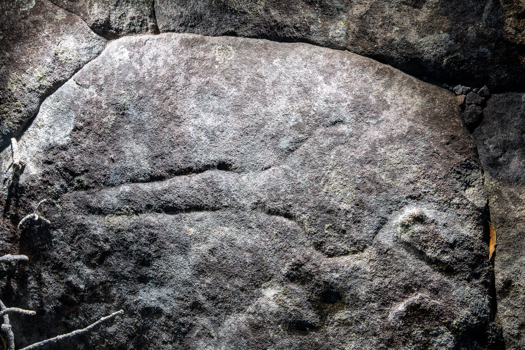 Aboriginal engraving of a club at Tpham Hill (West Head)