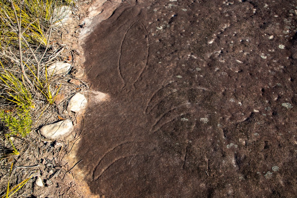 AWAT8358 LR Mount Murray Anderson Aboriginal engraving sites