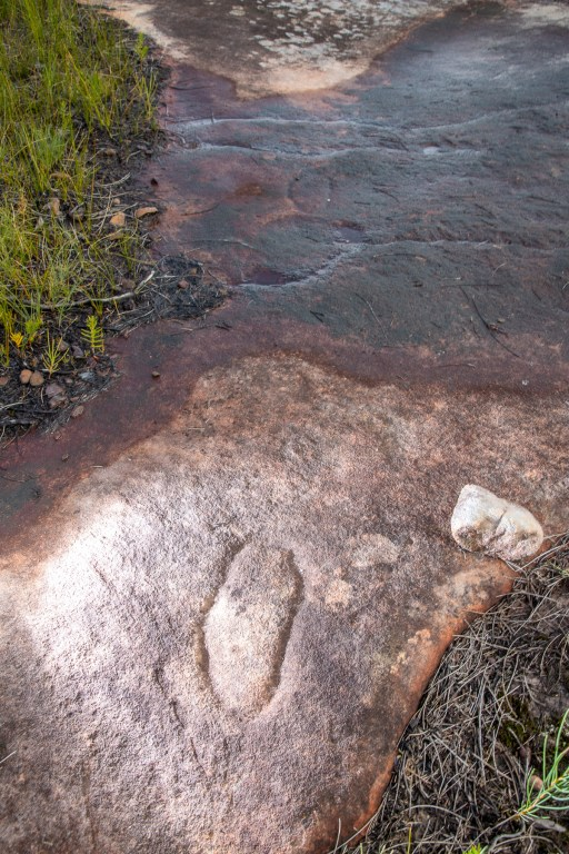 Lines of mundoes on one of the Resolute Track Aboriginal engraving sites