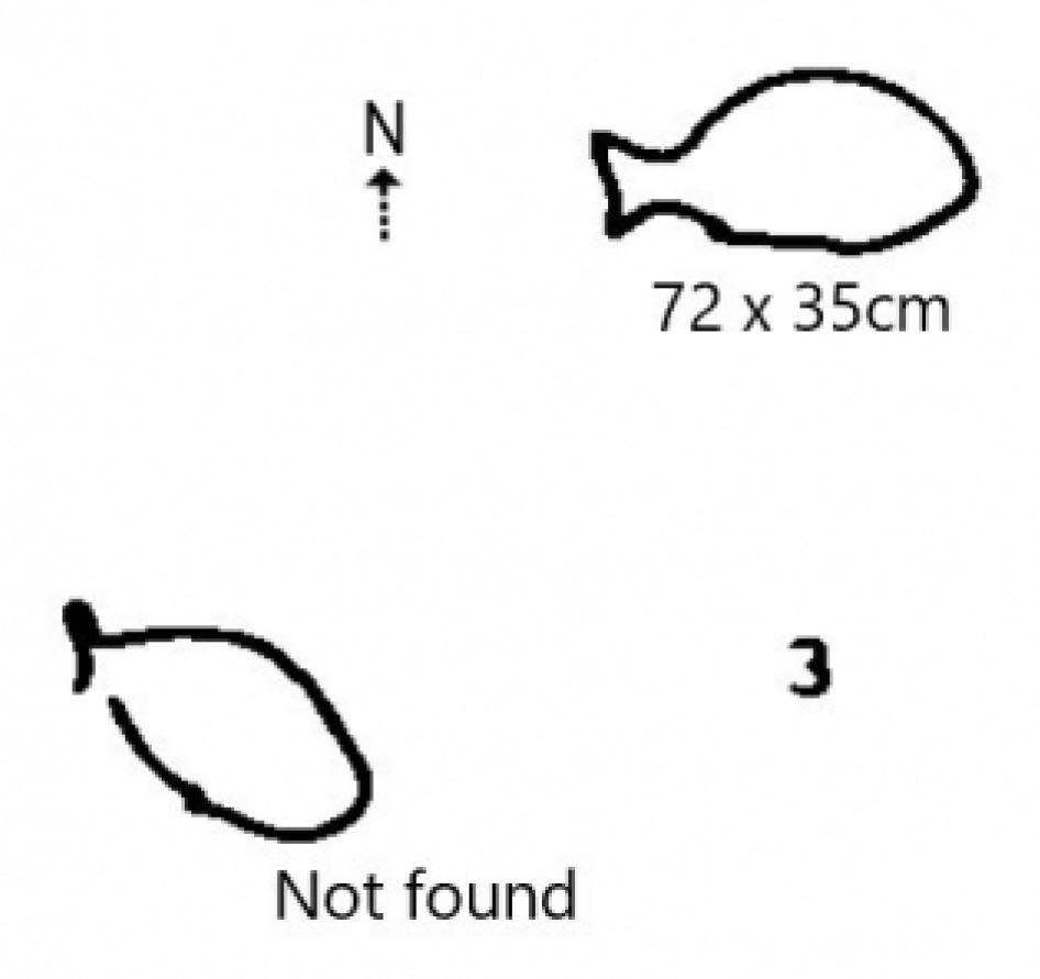 Engraving ResoluteTrack Fish Resolute Track Eel engravings