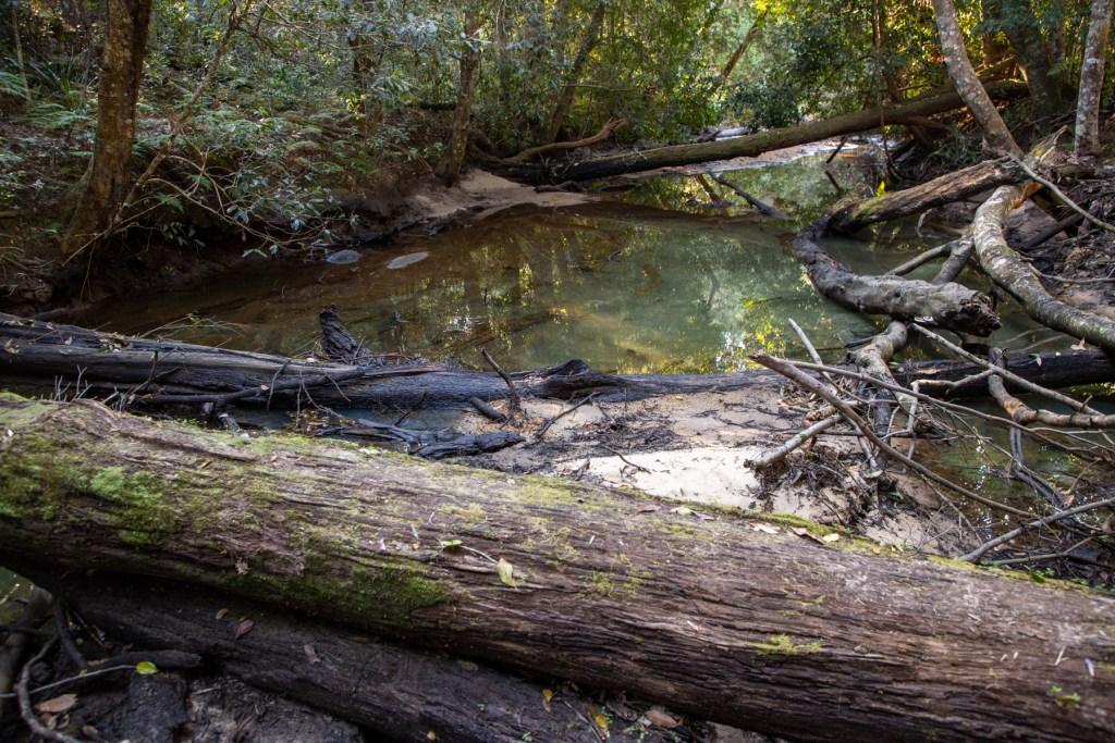 AWAT0798 LR Smiths Creek Loop