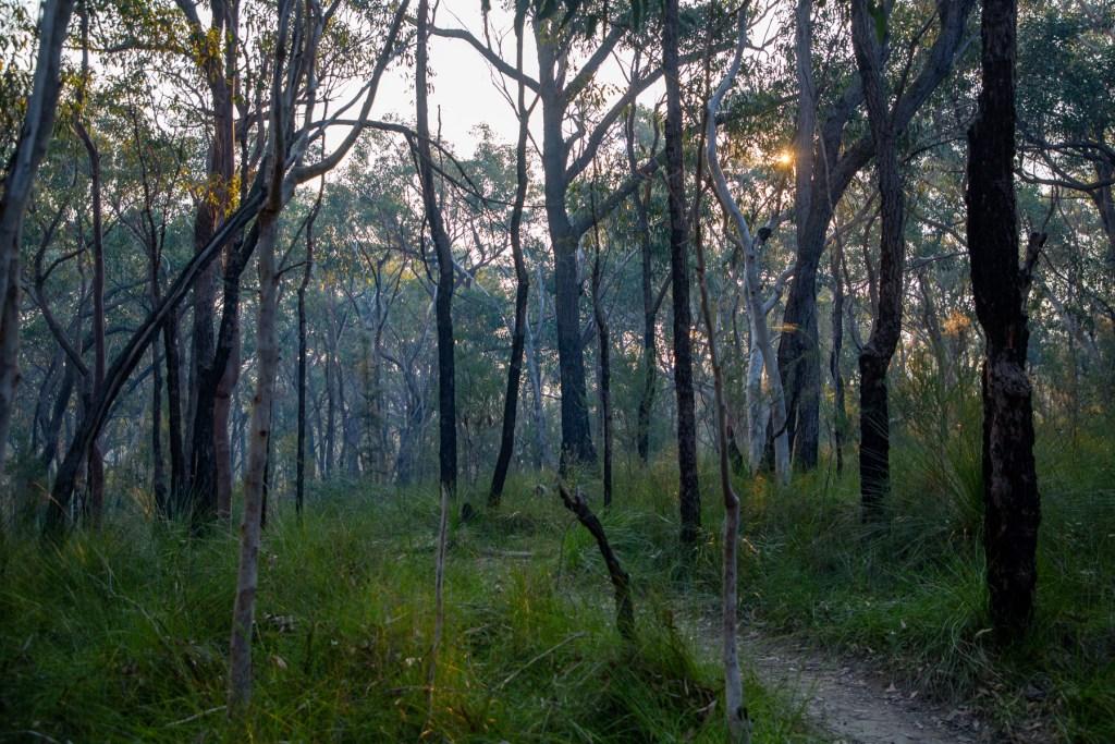 Cooyong Neverfail Trail Loop walk