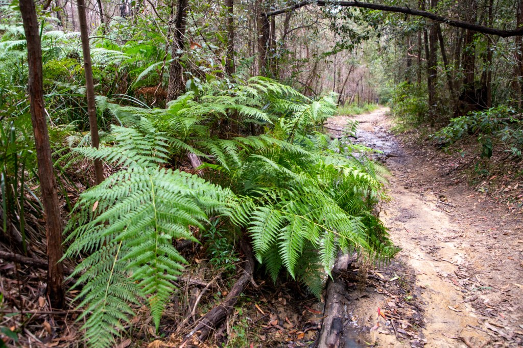AWAT2782 LR Twin Creeks Reserve - a short but interesting loop walk