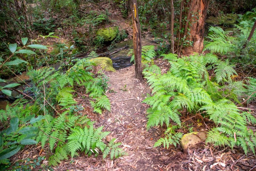 AWAT2792 LR Twin Creeks Reserve - a short but interesting loop walk