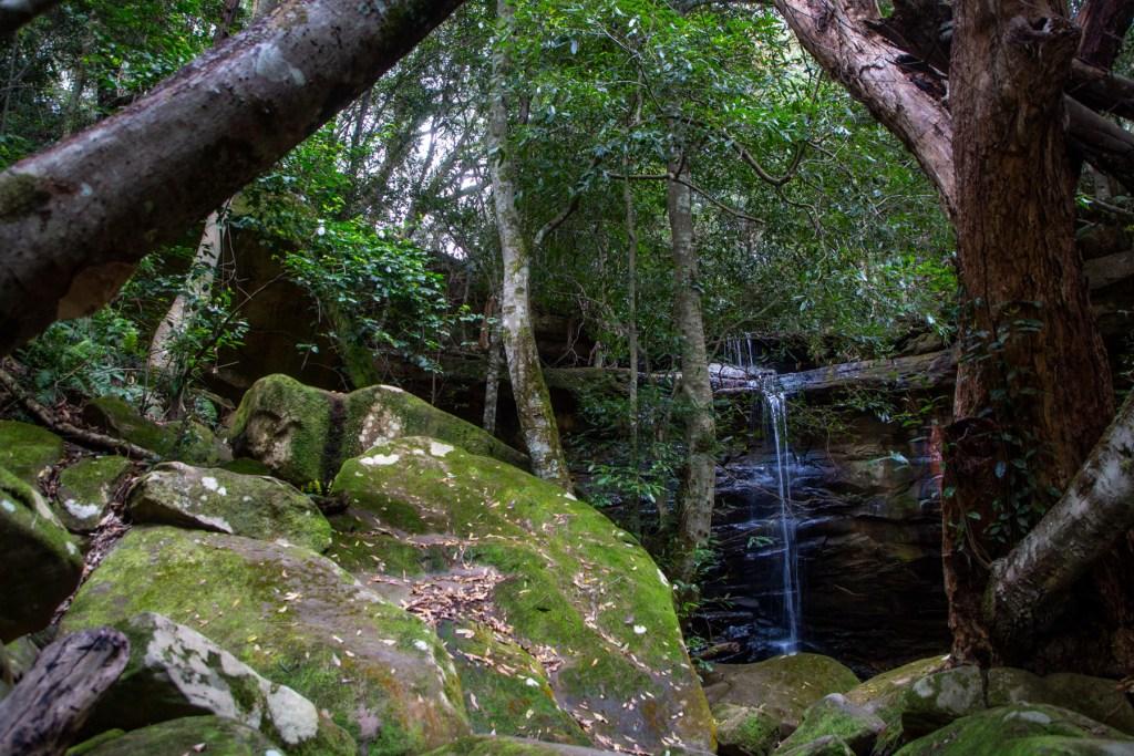 AWAT3240 LR Exploring Mullet Creek in Irrawong Reserve