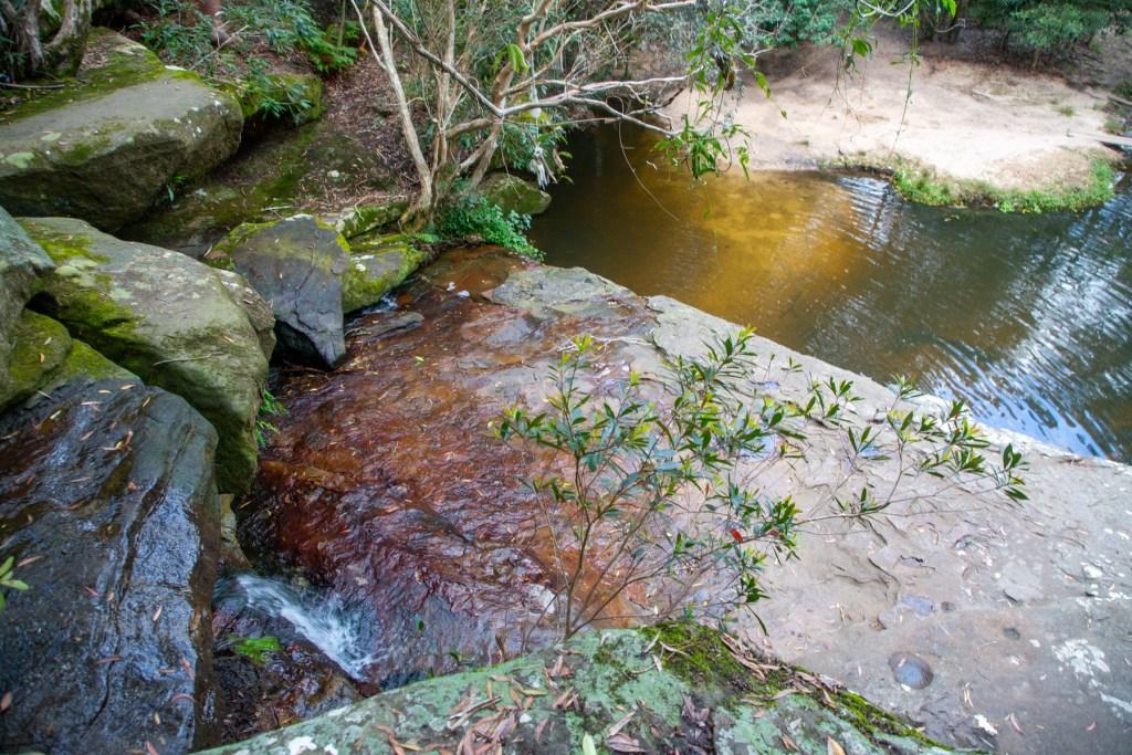 AWAT3259 LR Exploring Mullet Creek in Irrawong Reserve