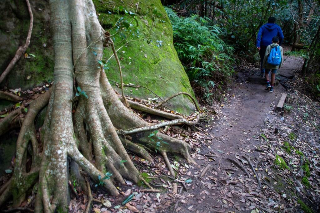 AWAT3307 LR Exploring Mullet Creek in Irrawong Reserve