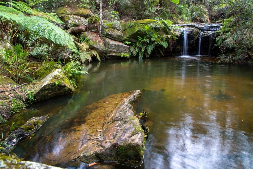 Mullet Creek in Irrawong Reserve