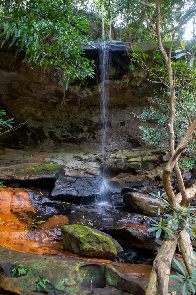 AWAT3597 LR Exploring Mullet Creek in Irrawong Reserve