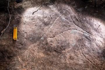 AWAT3992 LR Kierans Creek Emus