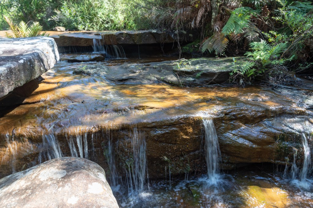 Canon EOS 6D Mark II242 LR Forest Path cascade (Illawarra Escarpment)