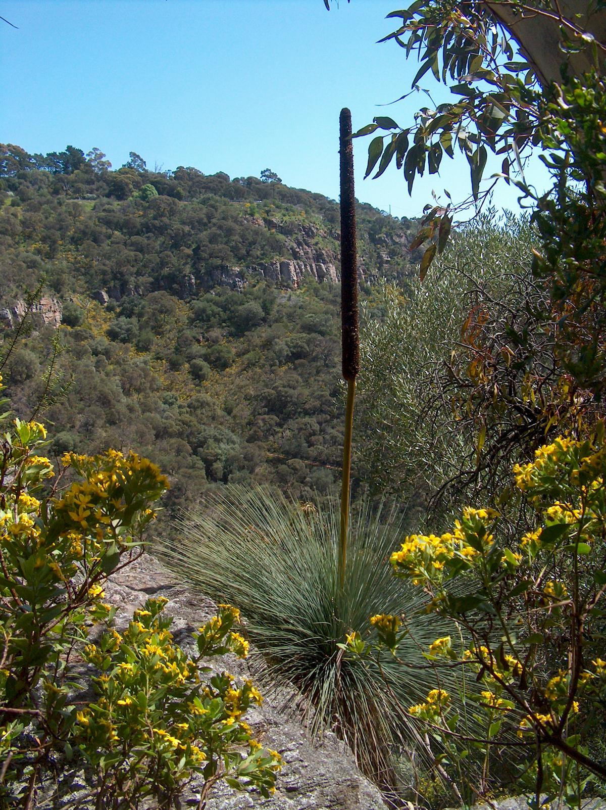 HPIM4335 LR Yurrebilla Trail (Norton Summit to Morialta)
