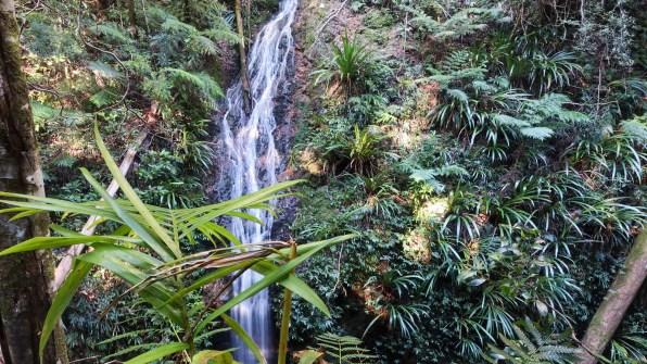 Gogindara Falls (Lamington National Park)