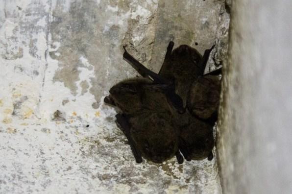 Small bats inside the ammunition magazine