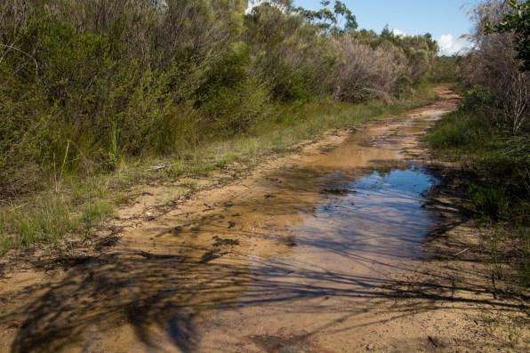 The Bairne Track, near the start