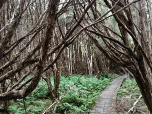Twisty trees