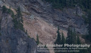 Goats high on the rocks above