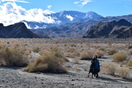 winter-desert