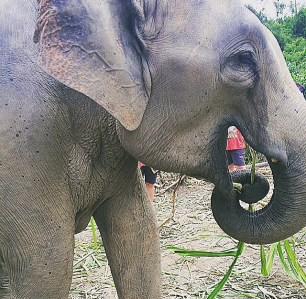 elephant santcuary park!