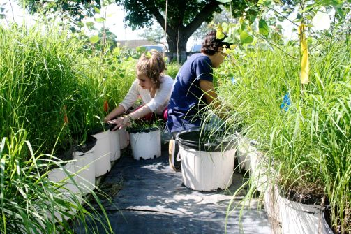 Ameerah and Jay weeding the experimental pots