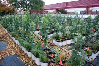 Genotype x Environment Interaction Common Garden
