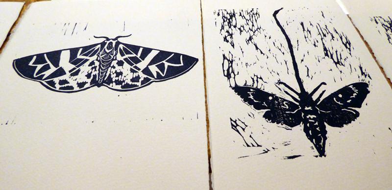 4_moth_migration_printsocial_lorenz