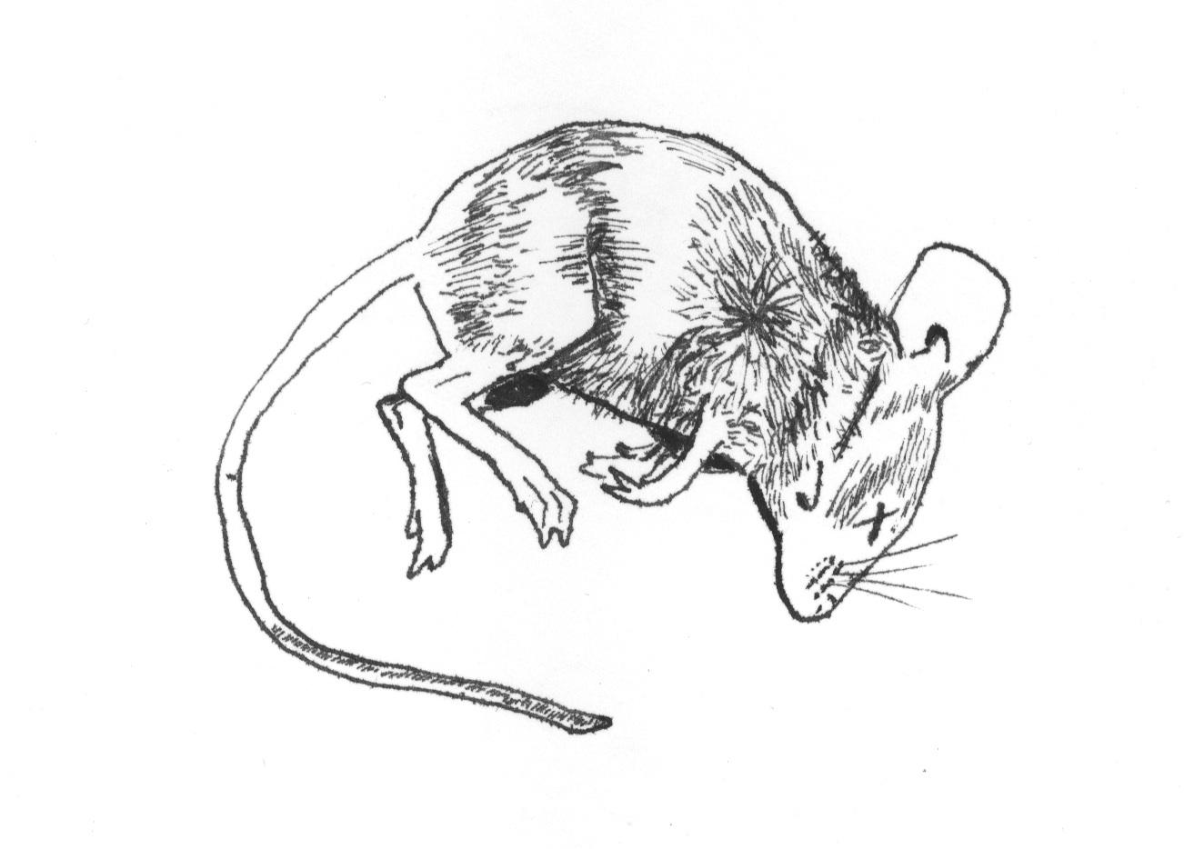 Dead Mouse Hilary Schenker