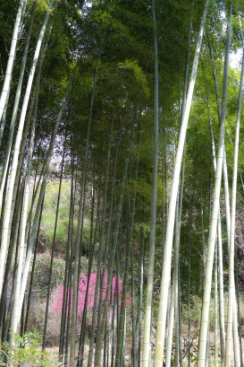 We wandered through this natural bamboo forest