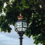 #royalstreetlight