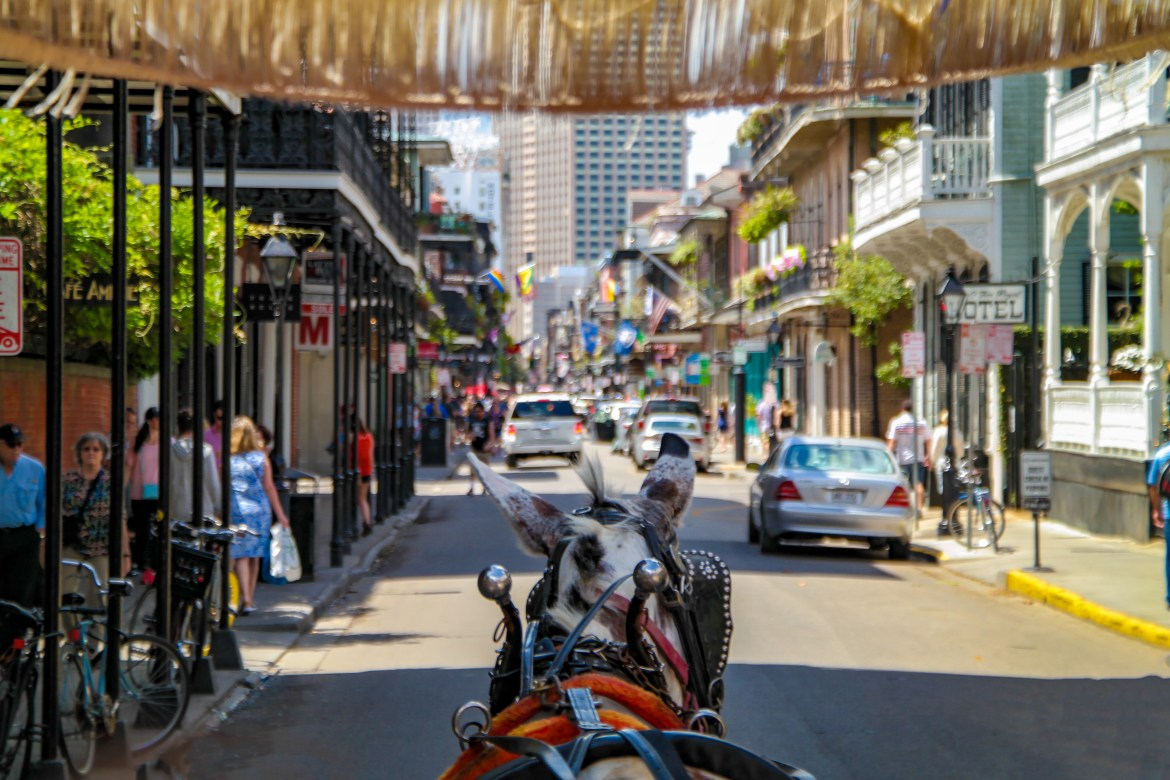 Mule Carriage Ride New Orleans