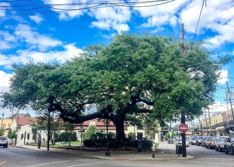 Magazine Street New Orleans Louisiana