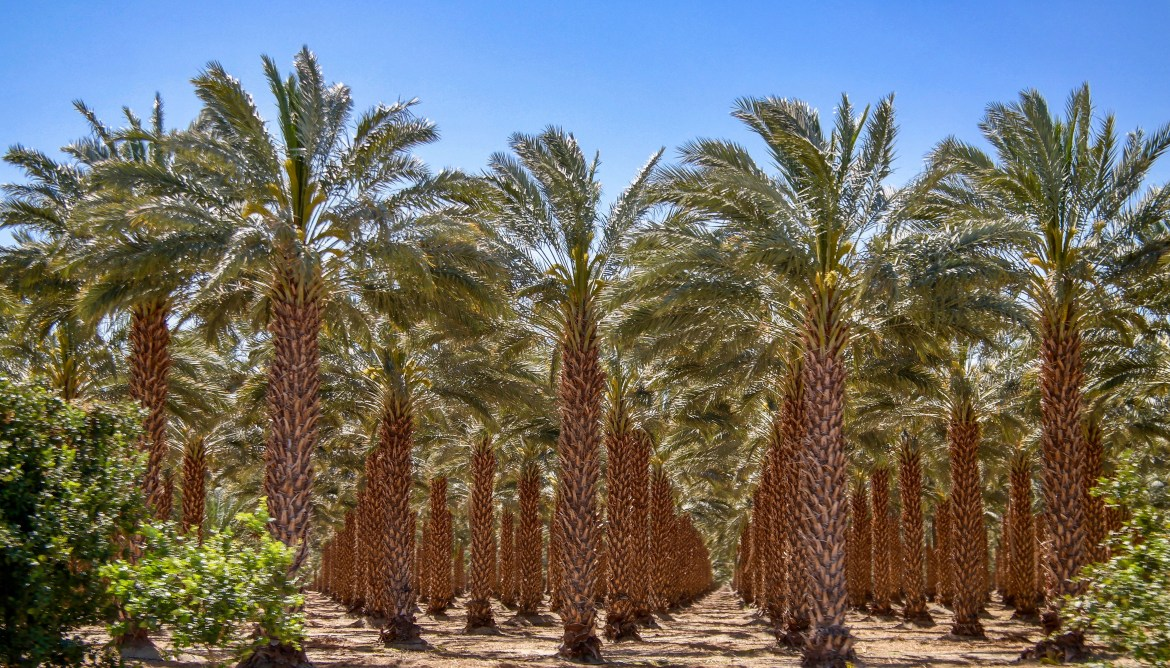 Date Palms Palm Springs California