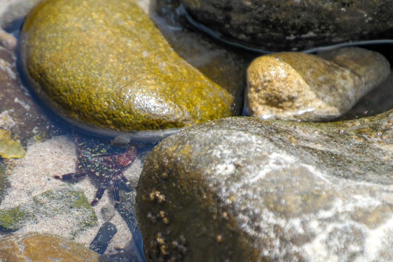 Leo Carrillo Tide Pools Malibu California