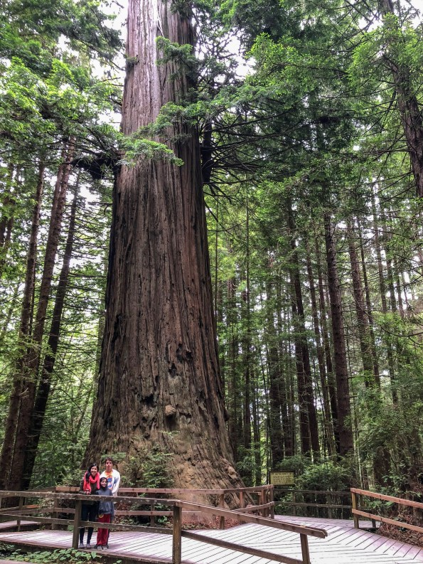The Brotherhood tree is 19 feet in diameter.