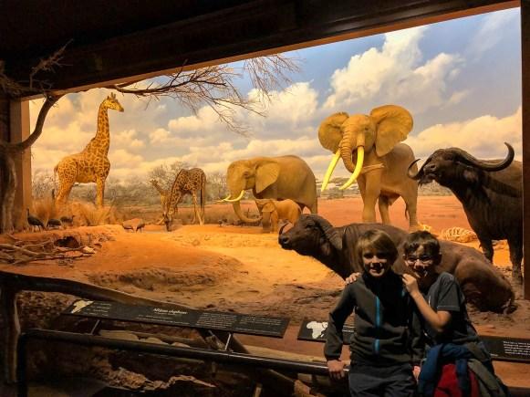 Hall of African Mammals NHMLA