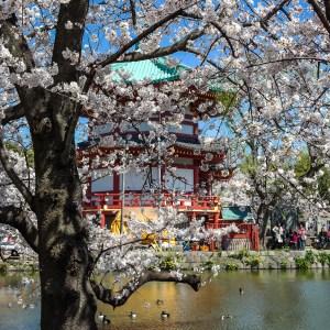 Bentendo Temple Ueno Park Tokyo Japan #bentendo