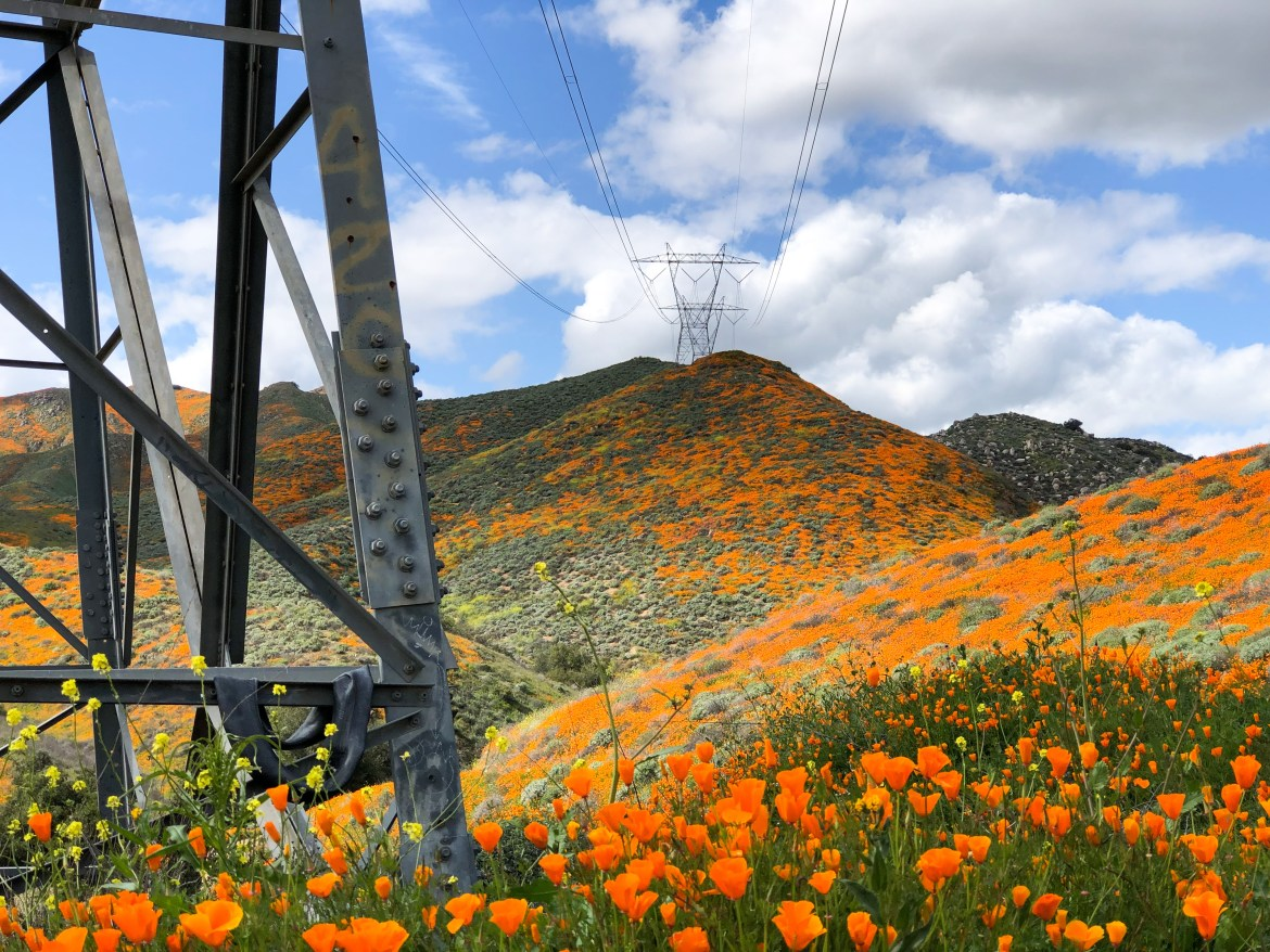 #California #SuperBloom2019 #WalkerCanyon