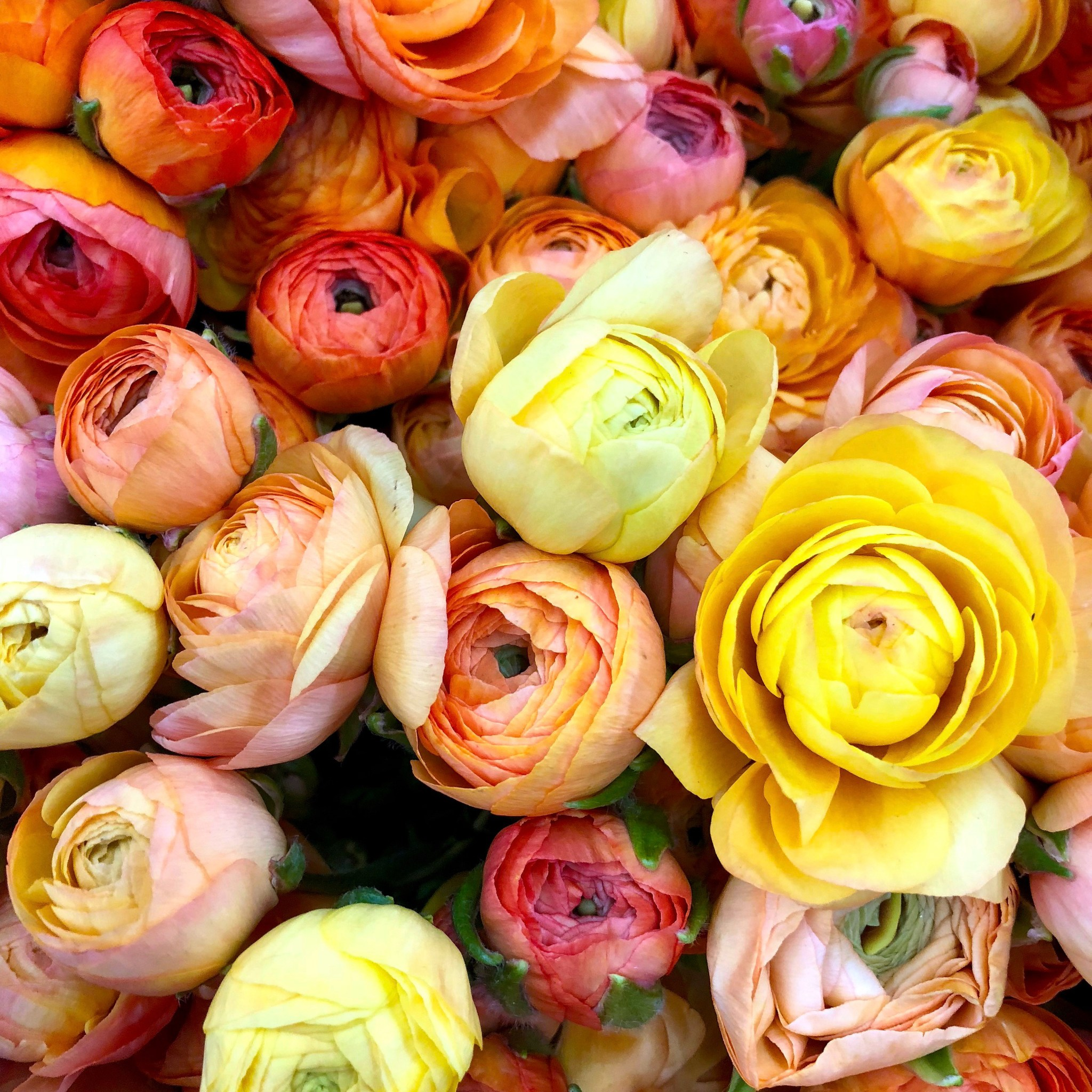 The Original Los Angeles Flower Market #ranunculus