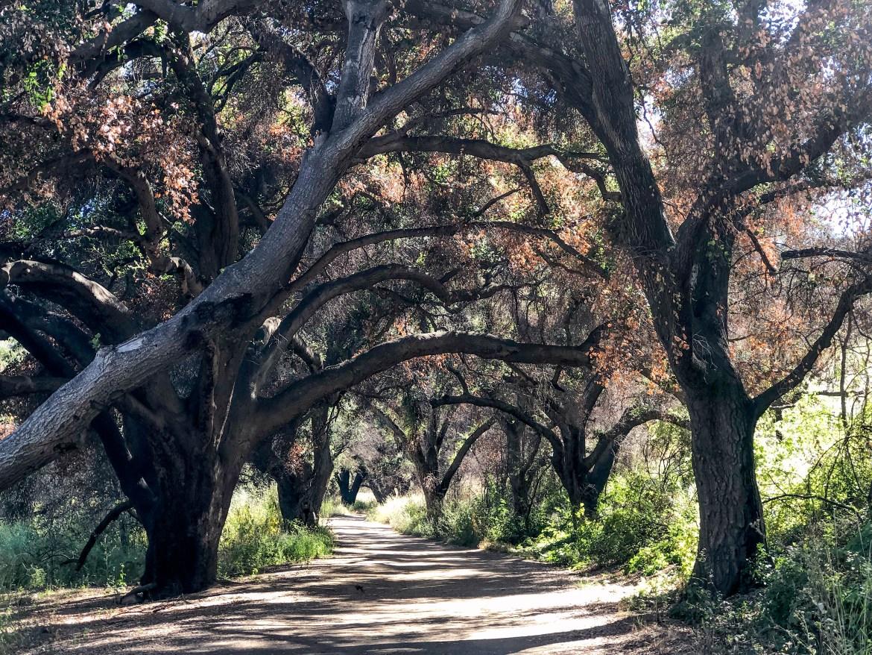 #malibu #thingstodoinla Malibu State Creek Park Malibu Los Angeles California