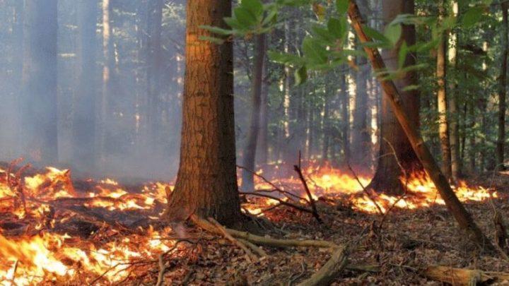 Arbeitsreiche Tage für den Feuerwehr-Flugdienst des Landesfeuerwehrverbandes Niedersachsen