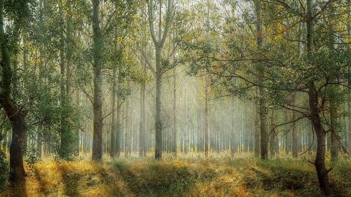 Trockenheit der vergangenen Wochen führt zu hoher Waldbrandgefahr – Noch bis Oktober gelten wichtige Regeln zur Vermeidung von Bränden