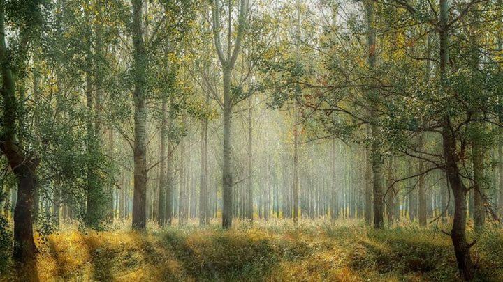 Drama in Niedersachsens Wäldern und Mooren