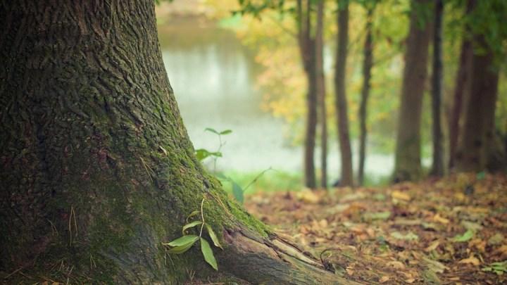 Naturerlebnistage im Wald