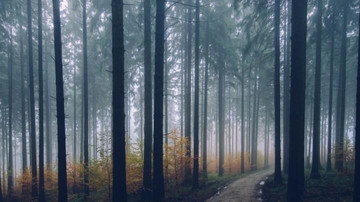 "Bürgerdialog zum ""Leitungsbau im Wald"""
