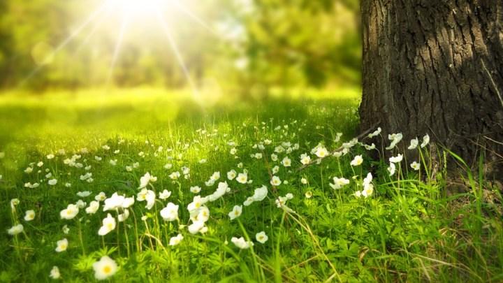 Richtiger Schnitt zur richtigen Zeit: Weidenpflege-Zuschuss über den Sommer beantragen